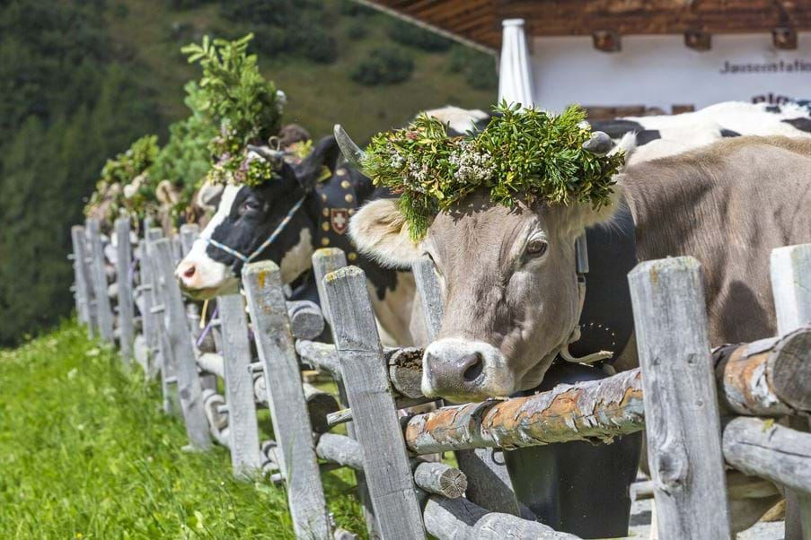 Quirky Alpine Traditions
